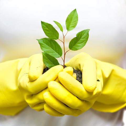 Plant a Plant Challenge