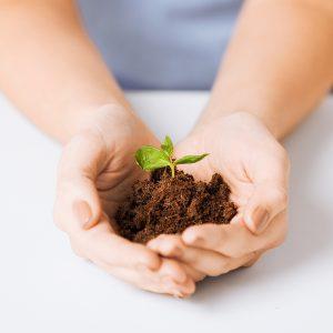 Plant Challenge